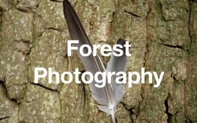 Photography in the Forest Tips and Tricks